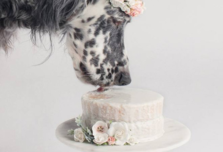 Peachy Cake Mixes For Dogs Personalized Dog Birthday Cakes Dog Ice Personalised Birthday Cards Veneteletsinfo